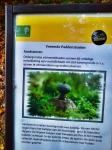 aardsterren-naarbuiten-vreemde-paddenstoelen-staatsbosbeheer