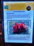 bruine trilzwam naarbuiten-vreemde-paddenstoelen-staatsbosbeheer