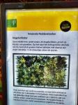 kogelschieter-naarbuiten-vreemde-paddenstoelen-staatsbosbeheer