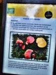 parasieten-naarbuiten-vreemde-paddenstoelen-staatsbosbeheer