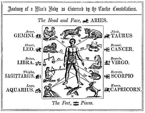 anatomy constellations