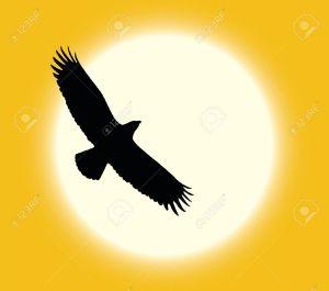 sun eagle